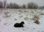 2012-01-15 Snowing in Redmond (6)